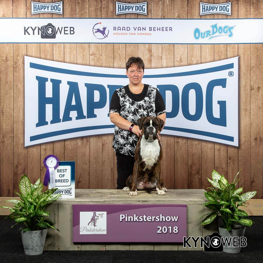 BEST OF BREED 55 PINKSTERSHOW 2018 Kynoweb 20180520 09 21 46 KY3 8062 002
